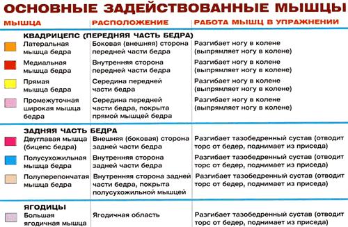 техника приседаний со штангой: