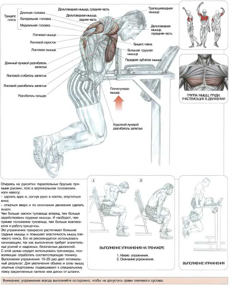 схема физических упражнений в картинках